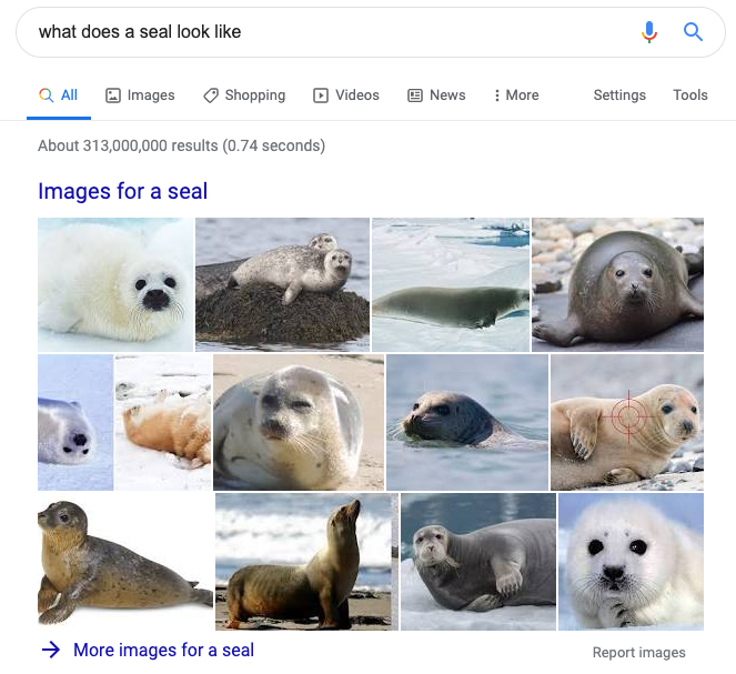 image showing the image search results in Google